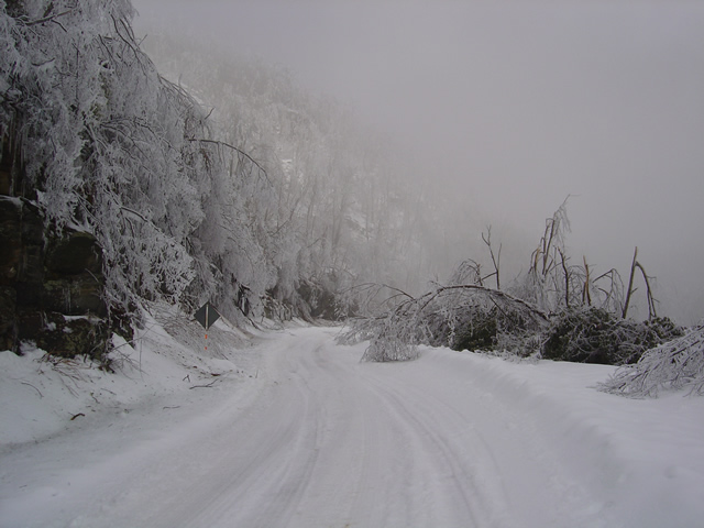 Photo - View of Blue Ridge Parkway with trees down from ice in February