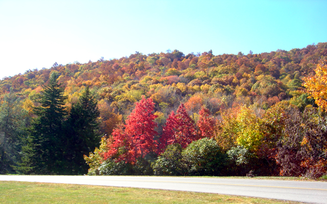 Photo - leaves changing at Soco Gap on the Blue Ridge Parkway