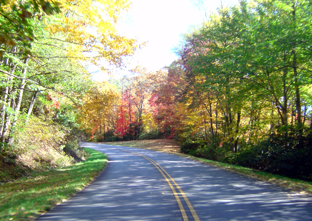 Photo - leaves changing on the Blue Ridge Parkway