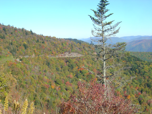 Photo - fall color on the Blue Ridge Parkway