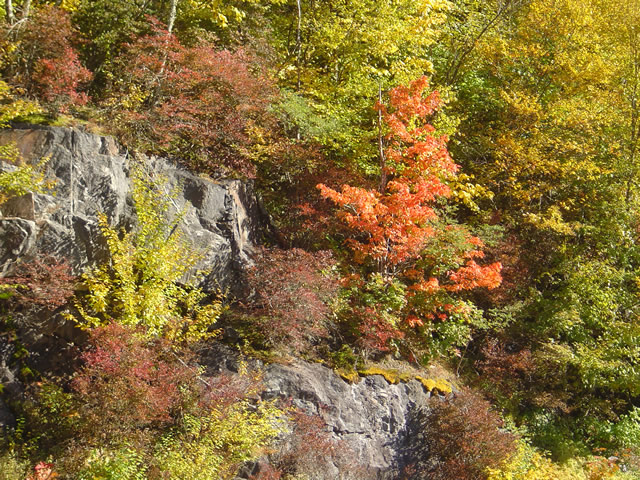 Photo - leaf changing on the blue ridge parkway
