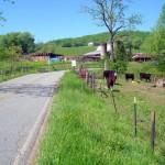 Waynesville-NC-view