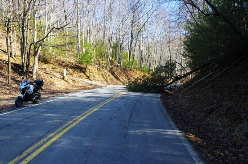 Photo - tree in roadway
