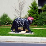 Photo - Bear in Cherokee